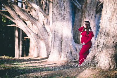 Nature Pregnancy Portrait With Majestic Trees - Capitola Maternity Photographer